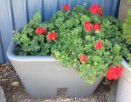 Small Garden Bed Tank